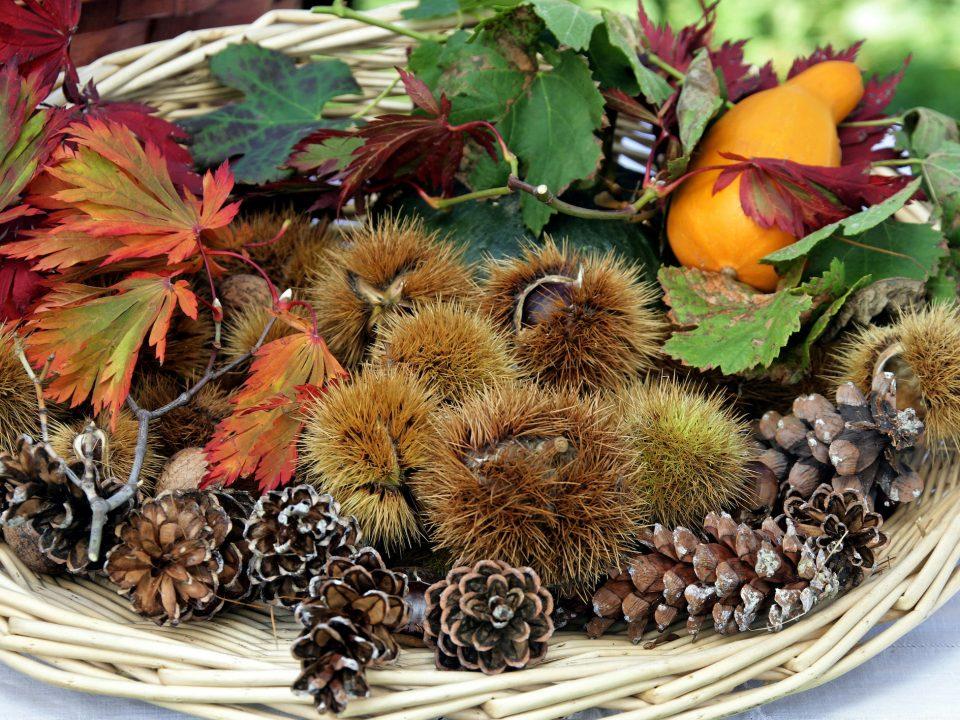 feste d'autunno autumnal festivals herbstfeste